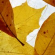 Autumn leaves — Stock Photo #1117149