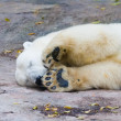 Polar bear — Foto de stock #1119604