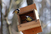 Quarrel of the titmouse — ストック写真