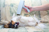 Grooming for a dog — Stock Photo