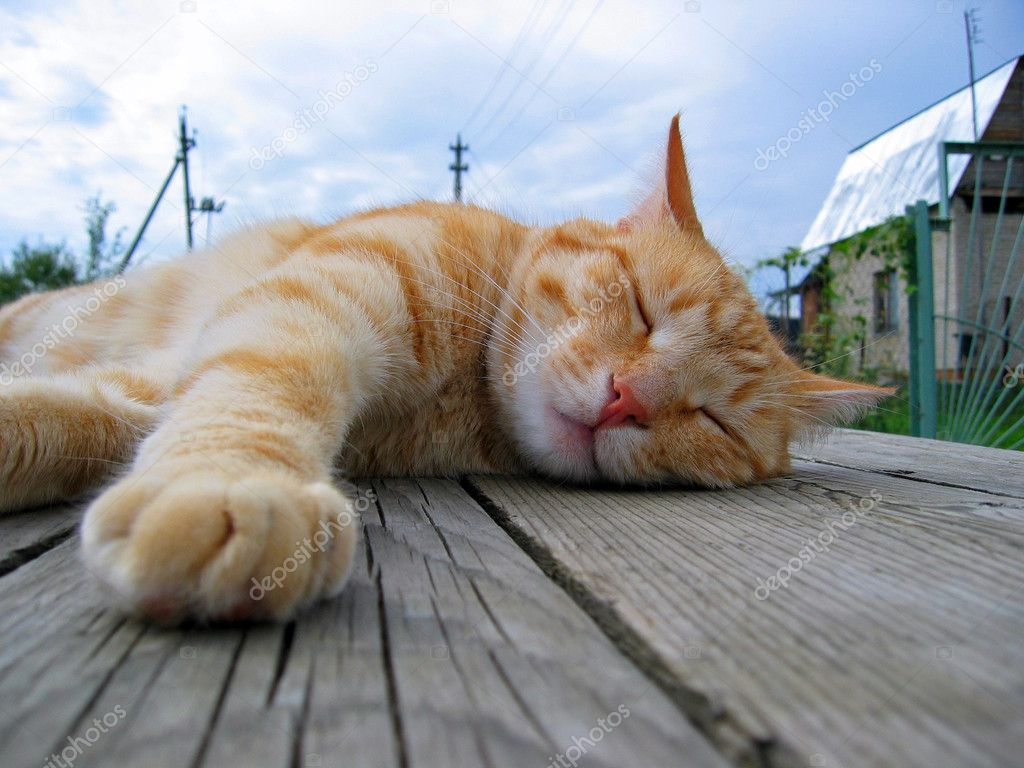 Cat sleeping on a table — Stock Photo #1116623