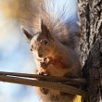 Squirrel — Stock Photo #1125732