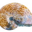 Ammonite Fossil - Stock Photo