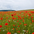Field with poppies — Stock Photo #1120052