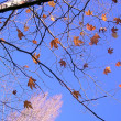 Autumn leaves against the blue sky — Stock Photo #1166040
