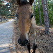 Foal - Foto Stock