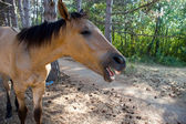 Portrait of a foal — Stock Photo