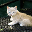 The small red kitten sits on a cage of a — Stock Photo #1308497