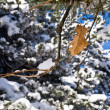 Autumn sheet strewn lightly with snow - Stock Photo