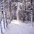 The snow road of snow to pine wood - Stock Photo