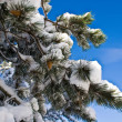 Fir tree brunch with snow in blue sky - Stock Photo