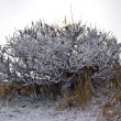 Freezed a tree in cold winter day — Stock Photo