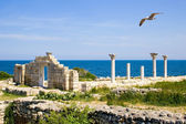 The seagull flying by above Chersonesos — Stock Photo