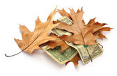 Dollars and leaves — Stock Photo