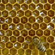 Bee honeycombs — Stock Photo #1333844
