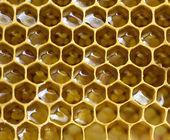 Arı peteğin — Stok fotoğraf