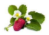 Strawberry. — Stock Photo