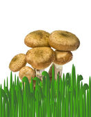 Mushrooms in a grass — Stock Photo