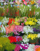 Floral sale — Stock Photo