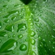 Water drops on green leaf — Stock Photo #1339616