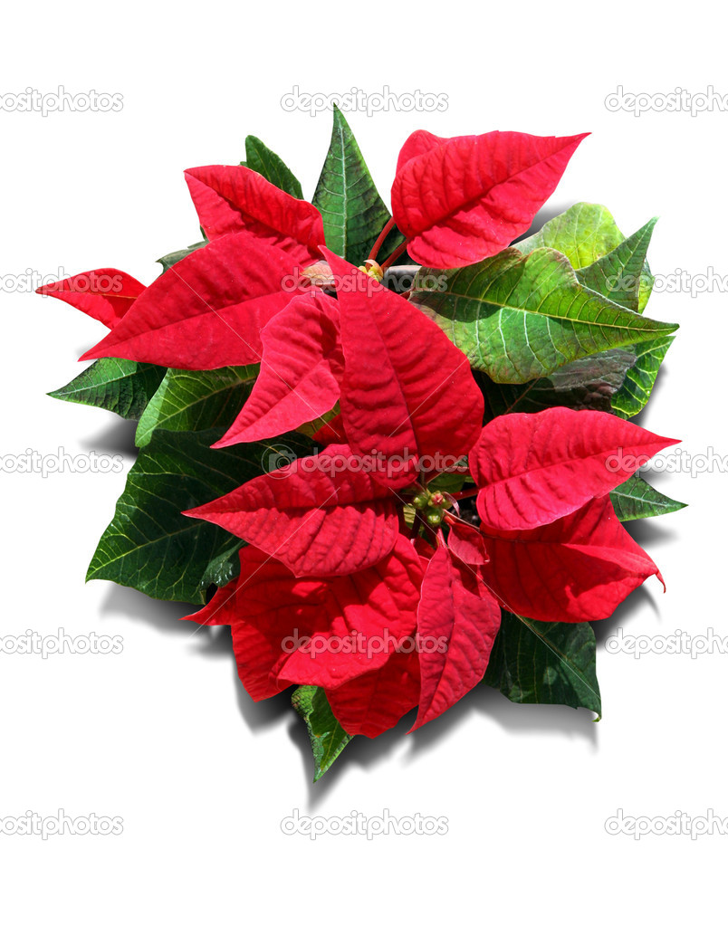 Indoor plant with red and green leaves stock photo akbudak 1339751 - Green leafy indoor plants ...