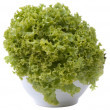Stock Photo: Whole lettuce on white background.