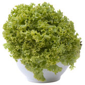 Whole lettuce on white background. — Stock Photo