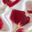 Royalty-Free Stock Photo: Petals of red rose on white silk