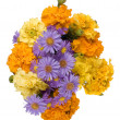 Bright autumn flowers on a white backgro - Stock Photo