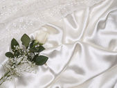 White rose on a background white silk — Stock Photo