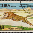 Postal stamp. The cheetah is an atypic — Stock Photo