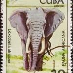 Postal stamp. The African Bush Elephant — Stock Photo