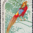 Postal stamp. Golden Pheasant — Stock Photo #1267052