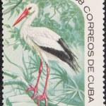 Постер, плакат: Postal stamp Ciconia