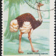 Stock Photo: Postal stamp.