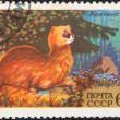Royalty-Free Stock Photo: Postal stamp. Siberian Mountain Weasel