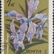 Stock Photo: Vintage stamp depicting Orchidaceae