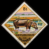 Postal stamp. hippopotamus — Stock Photo