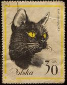 Postal stamp. Сat. — Stock Photo