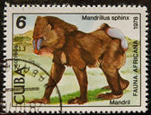 Postal stamp. The Hamadryas Baboon is — Stock Photo