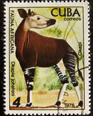 Postal stamp. The Okapi is a giraffid — Foto de Stock