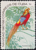 Postal stamp. The Golden Pheasant — Stock Photo
