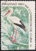 Postal stamp. Ciconia — Stock Photo