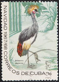 Postal stamp. The Black Crowned Crane — Stock Photo