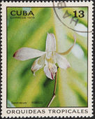 Postal stamp CUBA — Stock Photo