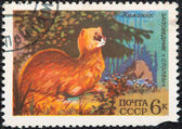 Postal stamp. Siberian Mountain Weasel — Stock Photo