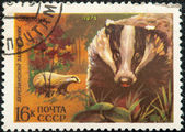 Postal stamp. European Badger — Stock Photo
