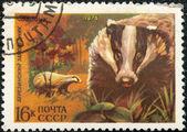 Postal stamp. European Badger — Stock Photo