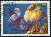 Postal stamp. The Ruff — Stock Photo