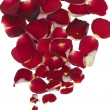 Stock Photo: Petals of red rose on white